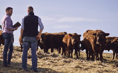 Secure Herd from Rural Crimes with an Advanced Livestock Tracking Solution